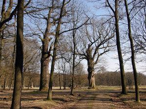 Péče orozvoj mimoprodukčních funkcí lesa